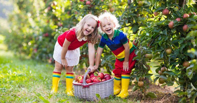 appelplukdag-de-haarse-gaard