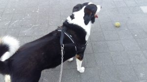 blog hp hond hummer Nekhernia