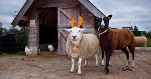 Castellum-Hoge-Woerd-omgetoverd-tot-kerstlocatie-