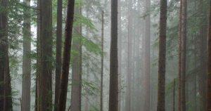 bos_milieu_groen_natuur_duurzaam