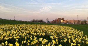 Lente in Parkwijk