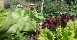 groente_biologisch_tuinieren_moestuin