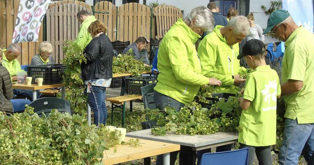 Vrijwilligers helpen mee hop te plukken in Maximapark (utrecht)