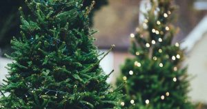 kerstbomen_foto_Annie_Spratt