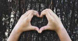 boom_bomen_milieu_bewust_duurzaam_foto_rawpixel