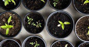 duurzaam_groen_bewust_plant_foto_Markus_Spiske