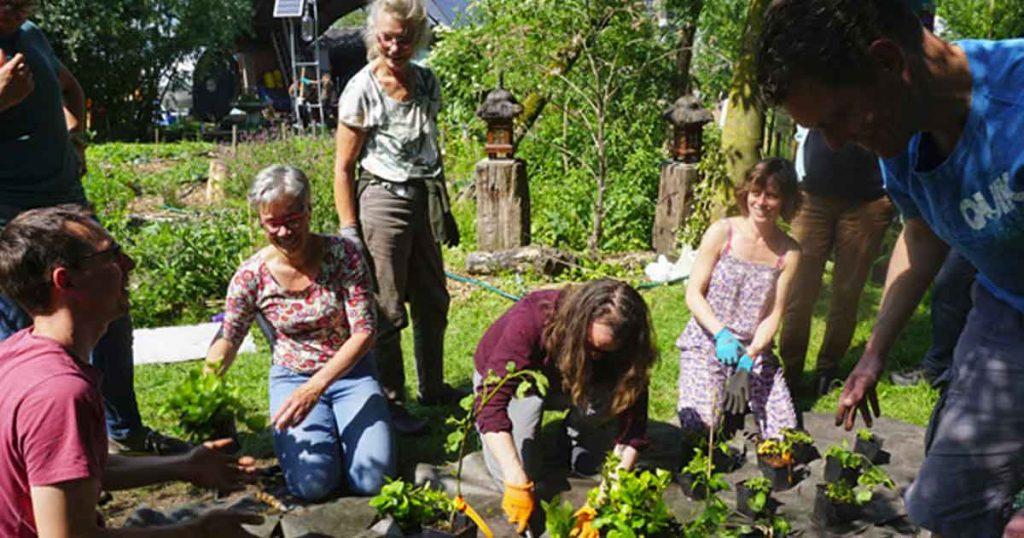 Eetbare-Woonwijk-Rijnvliet---foto-door-Food-Forestry