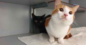 Twee-katten-achtergelaten-in-reismandje-in-Kloosterpark-De-Meern