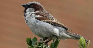 Nationale Tuinvogeltelling voor Beginners @ Steede Hoge Woerd