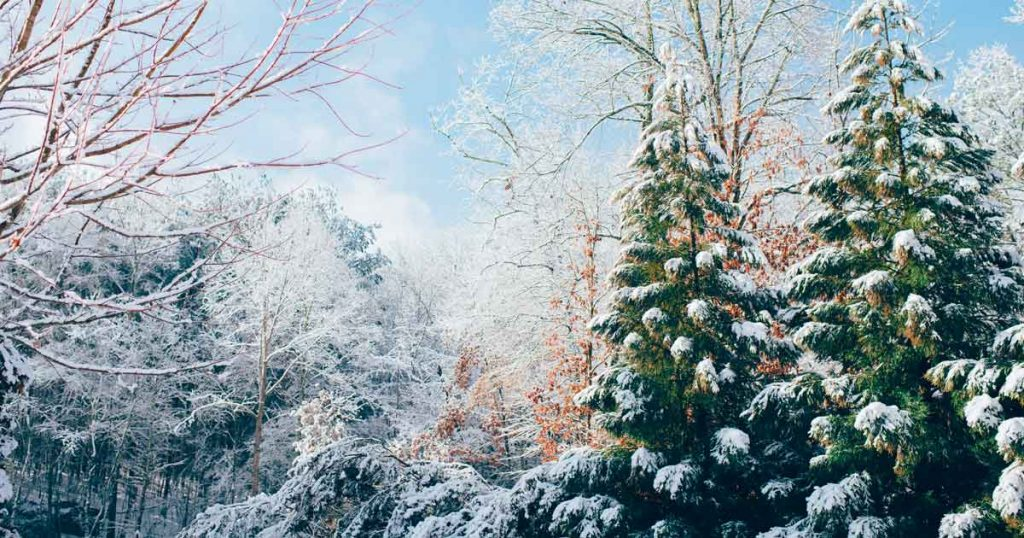 Winter kerst kerstbomen