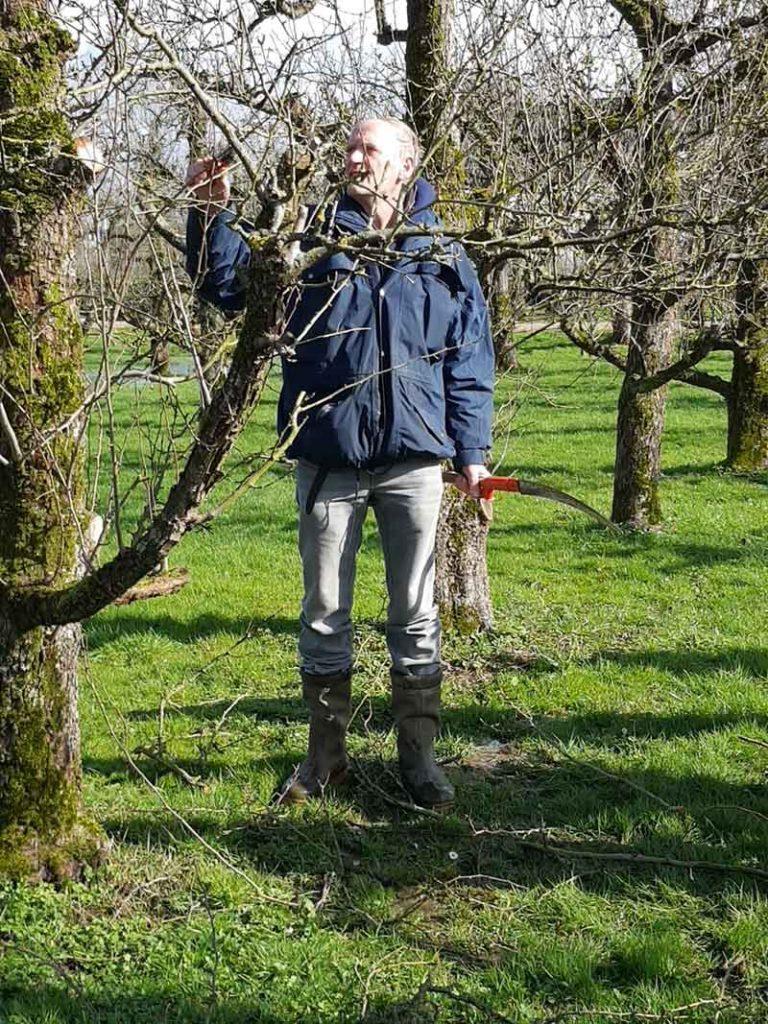 Zestig-jaar-oude-perenbomen-bij-Castellum-Hoge-Woerd-gesnoeid3