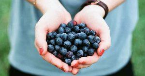 gezond_fruit_bosbessen