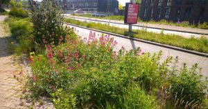 Bloemrijke bermen in Langerak | Foto: Hans Peter van Rietschoten