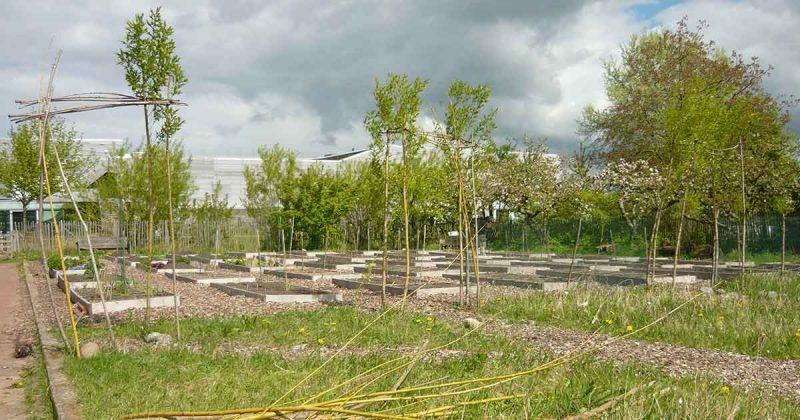 Tuinieren-in-Buurttuin-Johanniterveld-in-Het-Zand