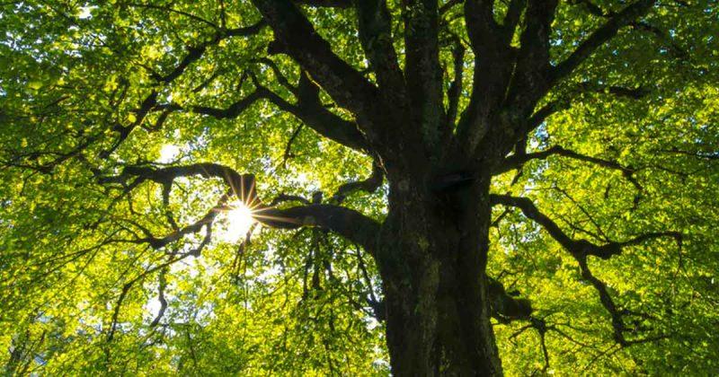 bomen_boom_foto_Jans-Archive